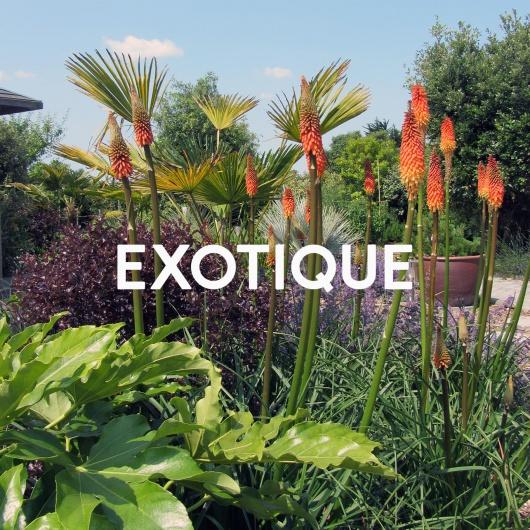 exotique_thumb2