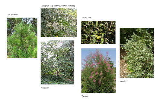 projet_arbres