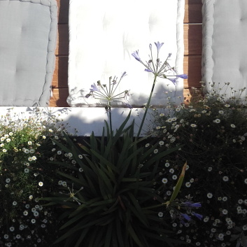 terrasse-ile-de-re-thumbnail